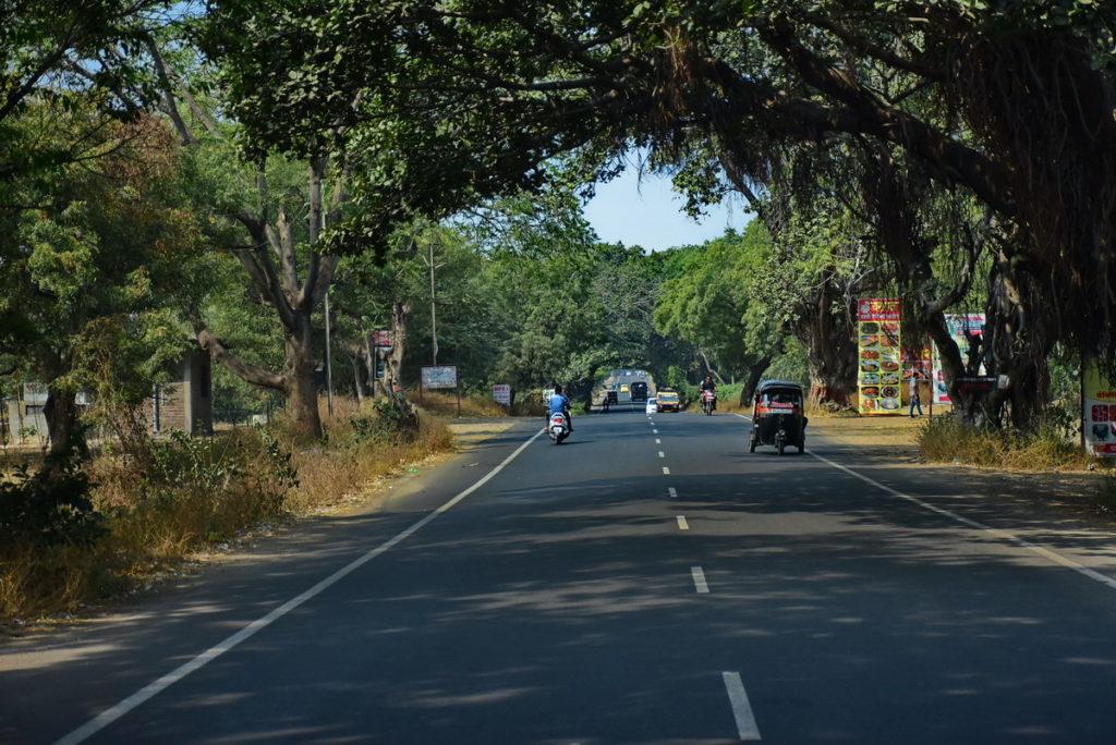 सड़क के दोनों ओर छाया प्रदान करने वाले वट वृक्ष मिलते हैं।