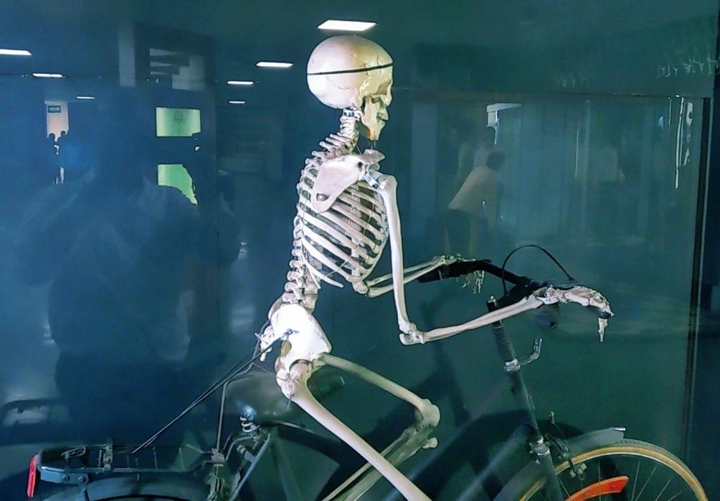 साइकिल चलाइये और देखिये कि आपकी कौन - कौन सी हड्डी कैसे चल रही है!