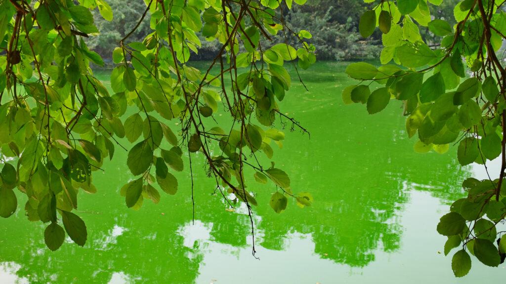 इसी झील ने हौजखास को यह नाम दिया है।   हौज = तालाब,  खास = शाही अर्थात् शाही तालाब